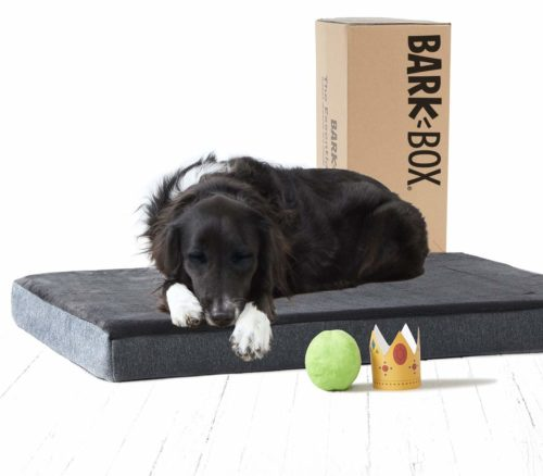BarkBox Memory Foam Dog Bed Multiple Sizes/Colors