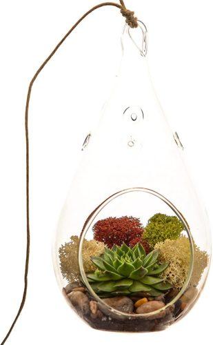 aquatic terrarium kit