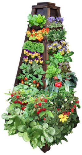 vertical garden plants