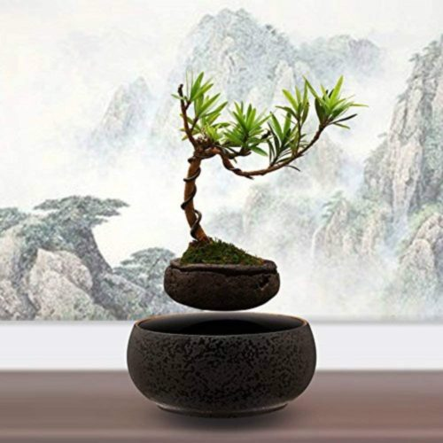 Lucy's Home Levitating Air Bonsai Pot - Magnetic Levitation
