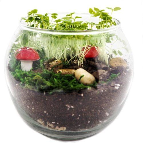 fairy garden kit with plants