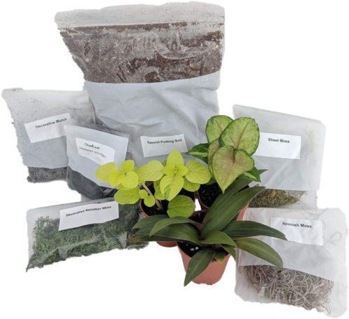 self-sustaining terrarium kit